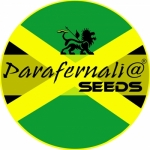 Profile picture of PARAFERNALIA